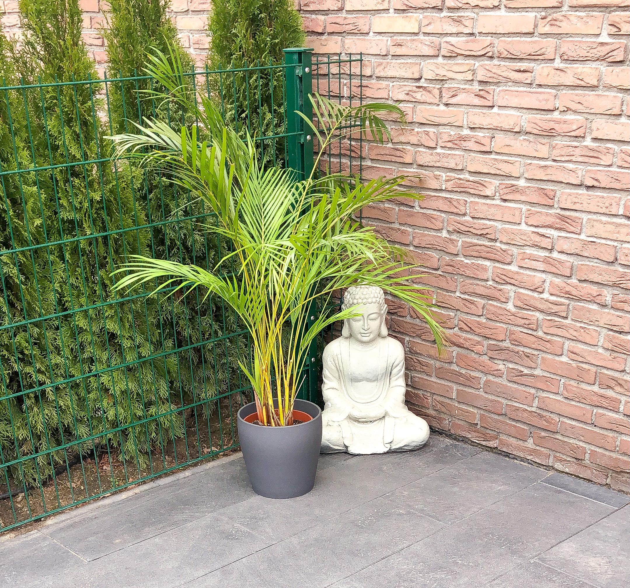 Februar Buddha